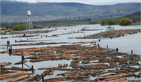 Photo of felled timber in Klamath Falls - taken for an article in the New York Times in 2007 - http://www.nytimes.com/2007/05/05/us/05timber.html?_r=0