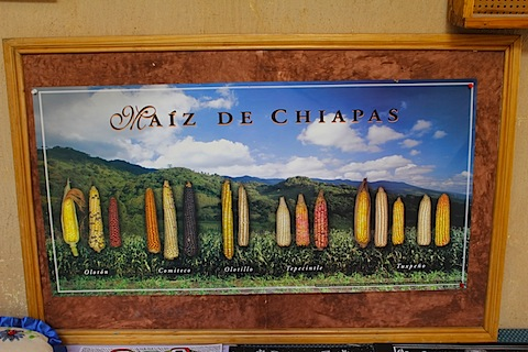 CHiapas - poster of kinds of maize.jpg